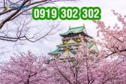Vé máy bay đi Nhật Bản thưởng ngoạn mùa hoa Anh đào giá tốt nhất Vé máy bay đi Nhật Bản giá tốt nhất