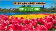 Lưu ý khi đặt mua vé máy bay đi Canada mùa hoa Tulip Lưu ý khi đặt mua vé máy bay đi Canada mùa hoa Tulip