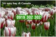 Lý do bạn nên đến Canada vào mùa hoa Tulip Lý do bạn nên đến Canada vào mùa hoa Tulip