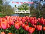 Đặt vé máy bay đi Canada tham gia lễ hội hoa Tulip Vé máy bay đi Canada tham gia lễ hội hoa Tulip