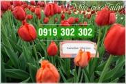 Đặt vé máy bay giá rẻ đi Canada mùa hoa Tulip Vé máy bay giá rẻ đi Canada mùa hoa Tulip
