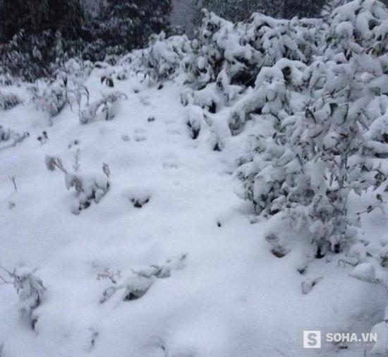 Tuyết rơi dày đặc tại Vinh (Nghệ An) Tuyết rơi dày đặc tại Vinh (Nghệ An)